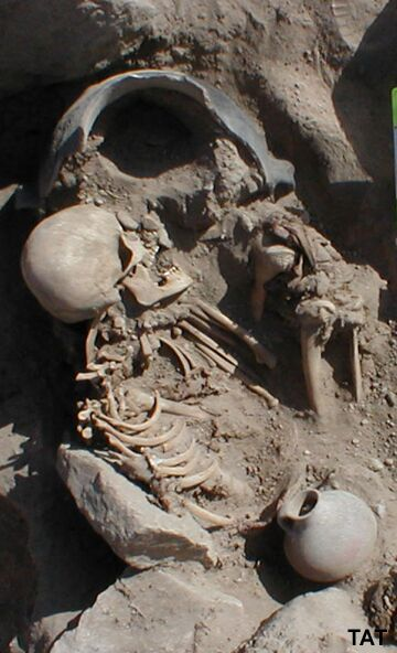 A head and torso of a skeleton still in the ground. There is a large ceramic pot-like object bu the skull and a small pot lower down.