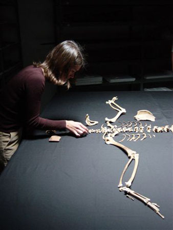 Tiffiny- wearing a red long sleeved shirt and khakis- putting together a non-human skeleton.