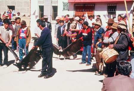 A crowd of people on a street. Some of them have drums. There are large vulture-like birds tied up.