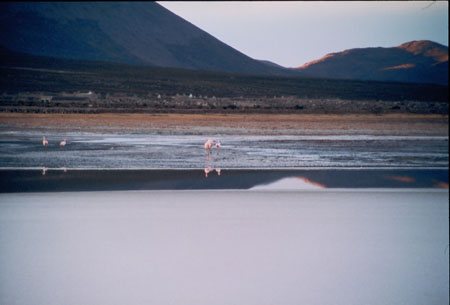 There is a flat landscape of water and grass. There are two pairs of flamingos stanidng in th emiddle ground. There are mountains in the background.