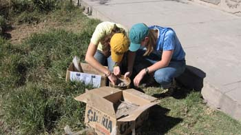 Cat and Susan are sitting on the grass next to a sidewalk. They are sifting through boxes of rocks and dirt. Cat (left) is wearing a light yellow shirt, jeans, and a dark yellow hat. Susan is wearing a blue shirt, jeans, and a teal hat.