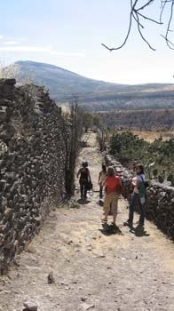 Four people walking down a rocky path with their backs to the camera. There is a tall rock wall on the left and a short wall on the right. There is a mountain in the distance and cacti on the other side of the short wall. The person in the back right is wearing a blue shirt and jeans. The person to the left is wearing an orange shirt and khakis. You can't tell the colors of what the others are wearing.