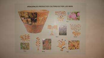 "A graphic at a museum with a pot. There are different pictures and drawings of plants that the Wari used to eat. The name of each is written in small black lettering that is too small to read. The title reads ""Principles Productos Cultivados for Los [not able to read the last word]."""