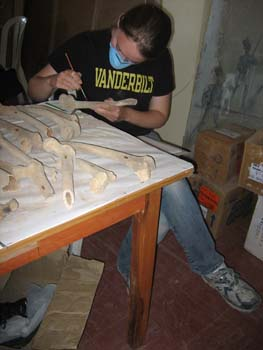 Emily is examining full and fragmented femurs. The bones are on a wooden table covered with a white paper. Emily is holding a bone in one had and a long thin wooden tool in the other. She is wearing a black shirt that has Vanderbilt written in yellow letterings, jeans,a blue face mask, and gray tennis shoes. Her brown hair is pulled back.