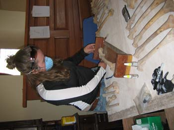 Rachel is standing at a table with femurs on it. She is using a wooden measuring tool used to estimate height of individuals. The table is covered with white paper and there is a wooden dresser behind Rachel. She is wearing a black jacket with white stripes down the arms, sunglasses on her head, and a blue face mask. She has long brown hair.
