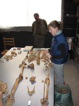 Melissa and Guillermo laying out a skeleton on a gray table. Melissa is wearing a black long sleeved shirt, blue vest, and jeans. Her brown hair is in a ponytail. Guillermo is leaning against the windowsill in the background. He is wearing a green long sleeved shirt, khaki jacket, and khaki pants.