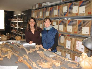 Tiffiny and Melissa sitting in front of a gray table with two skeletons laying on it. The one closest to them has its feet lying by them, and the other one has is head by them. Behind them are gray shelves with cardboard boxes with blue and red stripes as well as a white labels. Next to that shelf there is a shorter gray shelves with skulls or ceramics on it. In the background on the left, there is a window. Tiffiny is wearing a brown long sleeved shirt. Her brown hair is just past her shoulder. Melissa is wearing a black long sleeved shirt, blue vest, and a blue scarf. Her brown hair is held back.