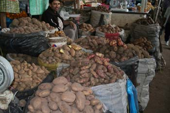 There are a lot of large bags filled with potatoes. There is a person sitting among them wearing a white shirt and a black jacket.