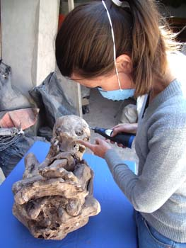 Tiffiny is holding a black and blue tool to a mummy curled up into a tight ball. The person's feet are facing the camera, but you can see the skull well. They are laying on their back on a blue table. Tiffint is wearing a blue face mask, a gray sweater, and jeans. Her brown hair is in a ponytail.