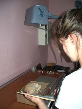 Luciana holding a clipboard and looking at a skull in a box. Her side is facing the camera. There is a piece of X-ray equipment over the skull. She is wearing a gray tshirt and pearl earrings. Her brown hair is in a bun.