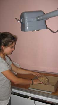 Luciana positioning a skull in a cardboard box under the lens of a gray x-ray machine. The table the box is on is wooden and the walls are pink Luciana is wearing a gray tshirt, white under shirt, and khaki pants. Her brown hair is in a ponytail.