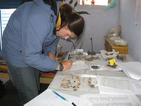 Ellen is bent over a table that has a pile of teeth on it. She is writing on one of the many papers surrounding the teeth. There are other bones on the far side of the table. Ellen is wearing a blue jacket with black inside the hood, another yellow hood, and jeans. She has brown hair in a ponytail.