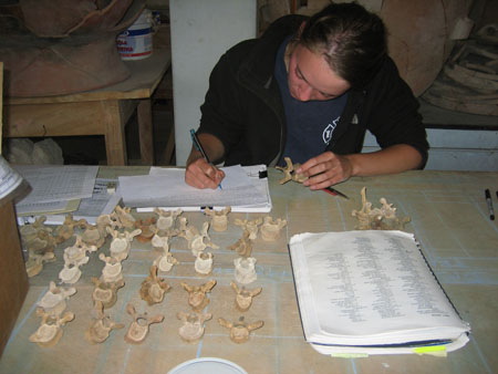 Emily is holding a vertebra and is looking at a spreadsheet is writing in. There are five rows with varying numbers of verts laying out on the table. There is a book opened to a list of different codes for different pathologies. Emily is wearing a gray tshirt and black jacket. Her light brown hair is tied back.
