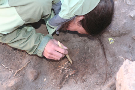 A person is leaning into a hole with a pile of juvenile teeth in it. They are holding a cylindrical tool with slanted points on both sides. They are wearing a jacket with dark blue, light blue, and gray patches.