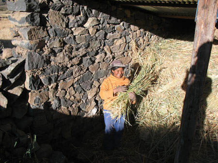Guillermina is standing by a wall made of dark colored stones, there is a wooden support beam in the front right of the photo holding up a tin roof. The space is filled with hay. Guillermina is holding a handful of it and smiling. She is wearing an orange long sleeved shirt, blue pants, and a brown hat.