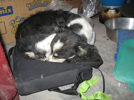 Bebe the dog is curled in a ball on a black computer bag. The floor is concrete. There is a box behind Bebe, a metal bowl on the right, two blue pillow-ish like things on the right, and the edge of something made of plastic that is red. Bebe is black and white.