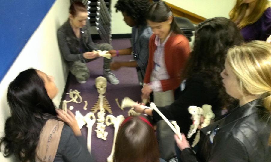 A group of six people are surrounding a skeleton that has been partially laid out. The other bones are being held by the people in the group.