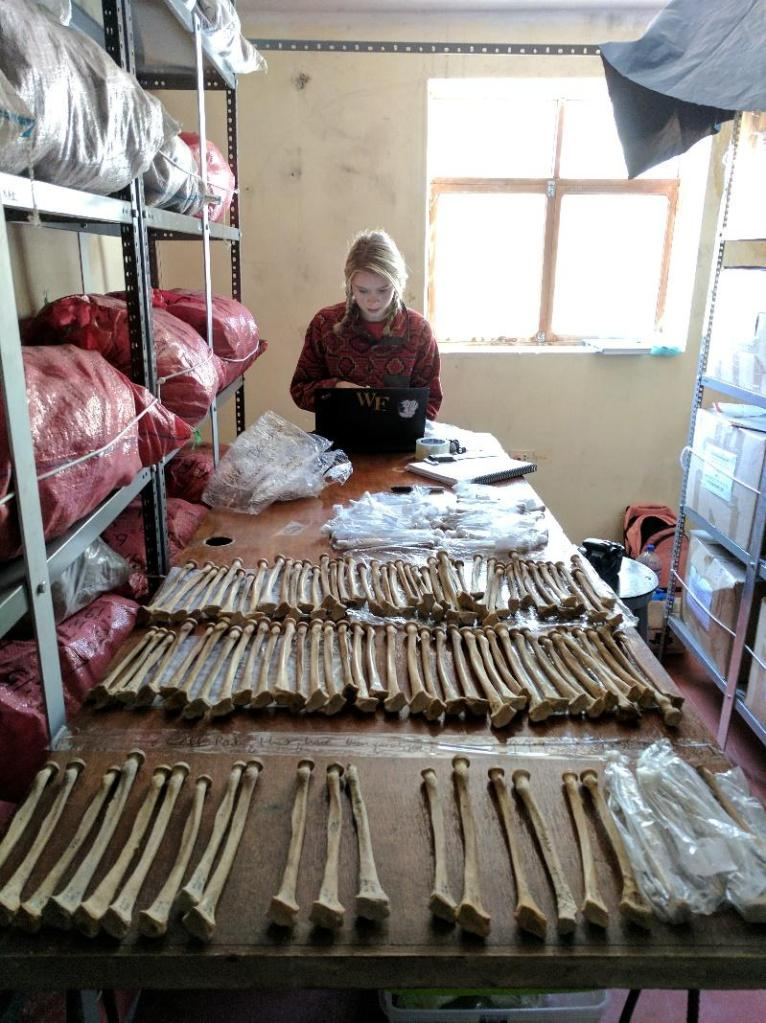 Anna is standing at the end of a table covered in radiuses- an arm bone. She is looking at a black laptop in front of her. She is wearing a red sweatshirt and blonde hair is in two braids.